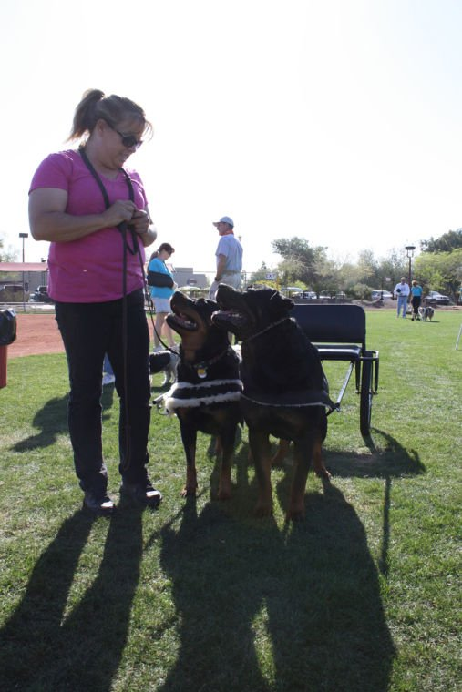 Ahwatukee Family Dog Show