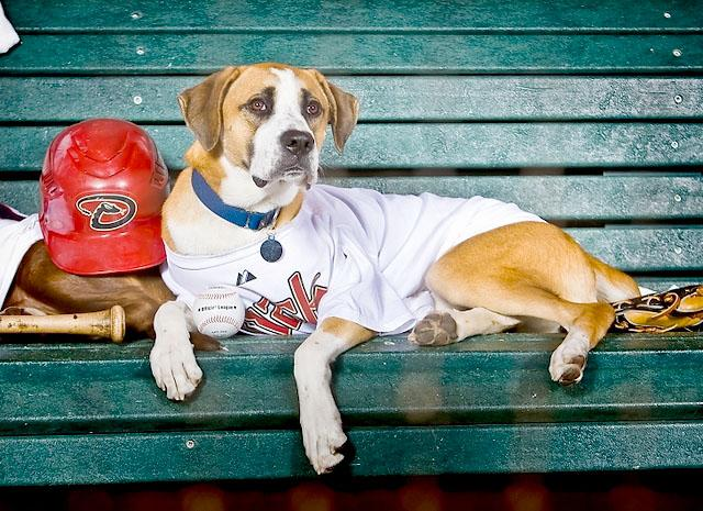 Take Fido Out to the Ballgame