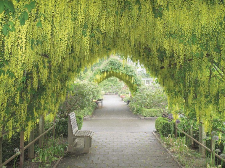 Gardening Arbor Plants