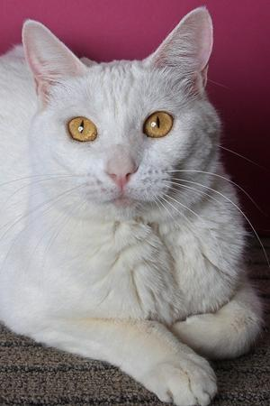 Someone to love: Snowball