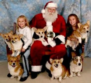 Santa photos, teeth cleaning at Bone-Appetit Dec. 5
