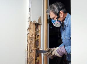 Many exterminators offer free home inspections if people suspect they have termites