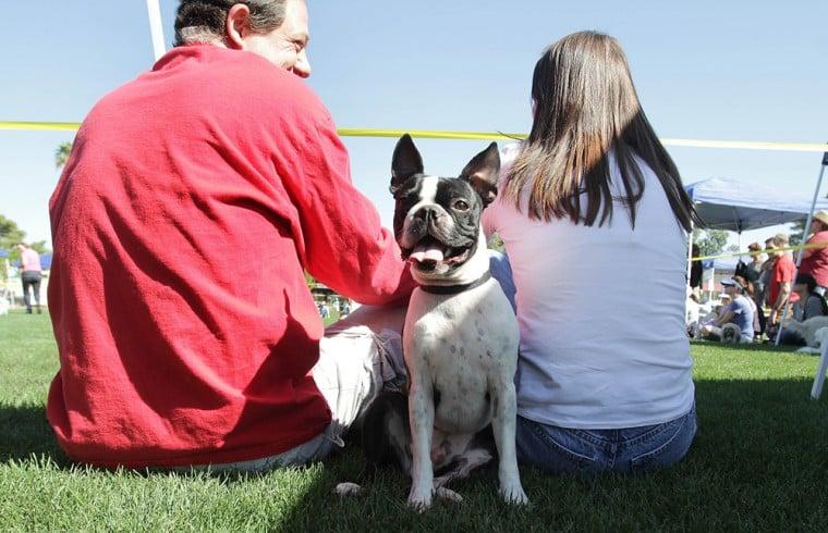 Ahwatukee Foothills Dog Show