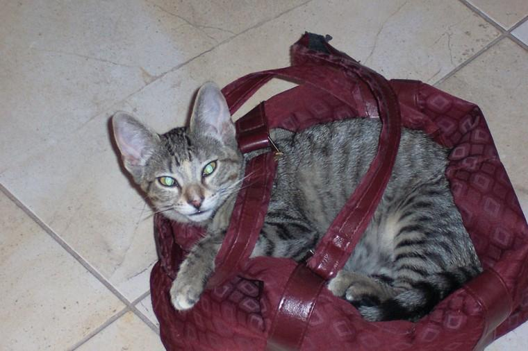 Pet of the Week: Please take me with you!