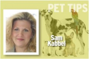 Pet Tips Sam Kabbel