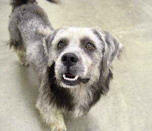 Pet of the Week: Kegan