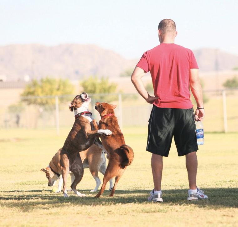 afn.100610.com.dogpark2.jpg