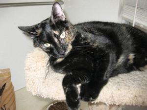 Someone to love: Gypsy