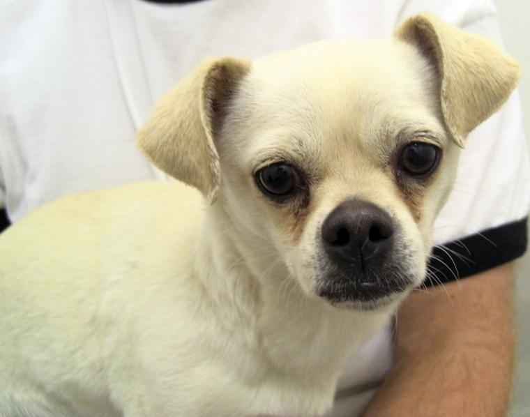Pet of the Week: Emily
