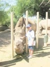 Camp Zoo: The ultimate animal experience