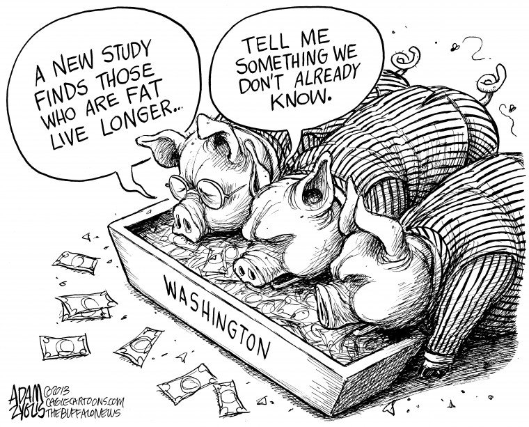 Washington Pigs