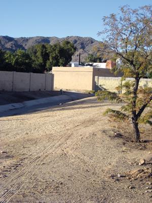 Javelina invade a quiet neighborhood