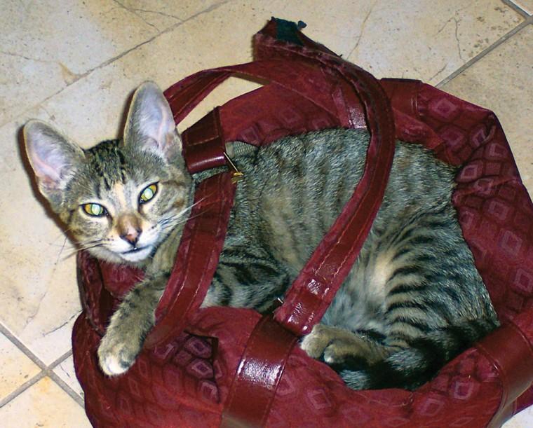 Pet of the Week: Kittens galore
