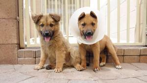 animalwelfare.002.dw.04222011.jpg