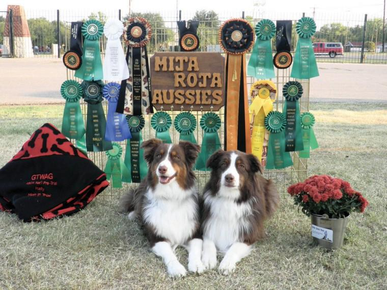 Australian Shepherd Nationals in Texas