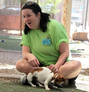 Arizona Animal Welfare League