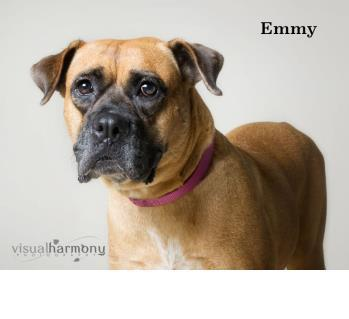 Someone to love: Emmy