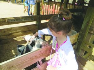 Arizona Renaissance Festival petting zoo