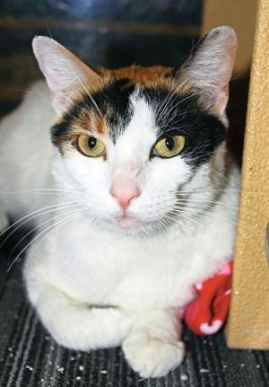 Pet of the Week: Chloe