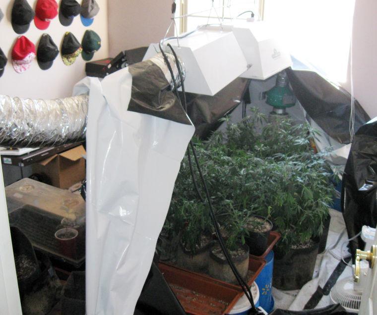 More than 100 marijuana plants found in Ahwatukee home