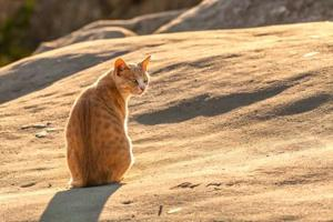 The conservancy blames cats for the extinction of entire species of birds.
