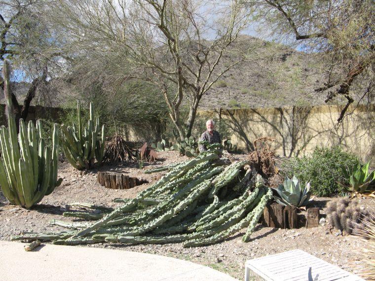 Totem pole cactus meets its end