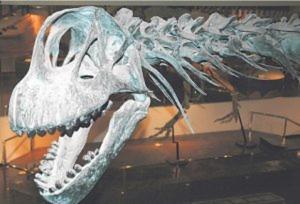 Arizona Museum of Natural History in Mesa