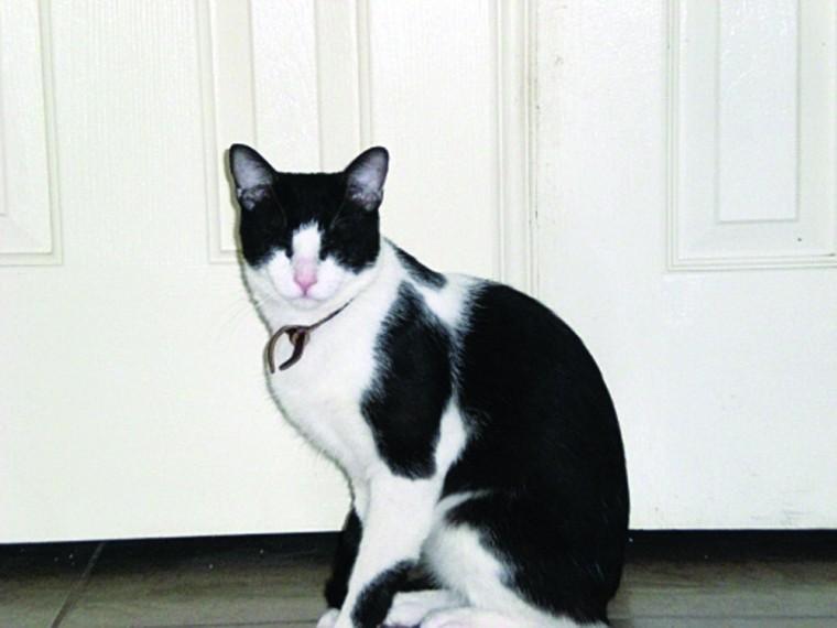 Pet of the Week: Hayden