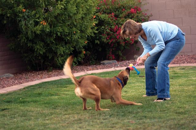 Deliberate dog poisoning leaves AF neighborhood nervous