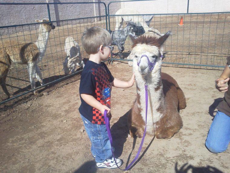 Alpaca festival lets kids get close