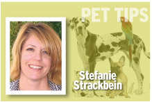 Pet Tips Stefanie Strackbein