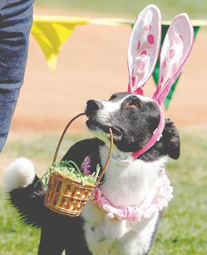 Ahwatukee Dog Show