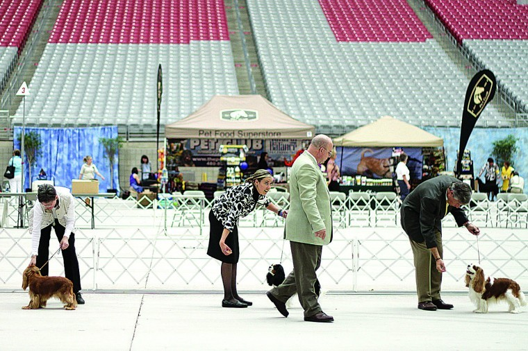 Dog show