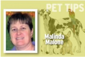 Pet Tips Malinda Malone