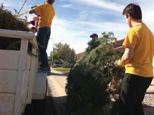 Boy Scouts collect Christmas trees