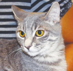 Someone to love: Gato