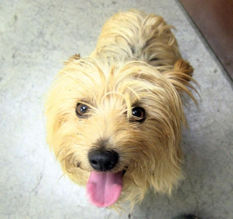 Pet of the Week: Bowie
