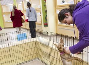 AAWL Mall Adoption Center