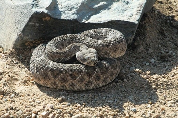 Warmer temperatures mean snakes are active