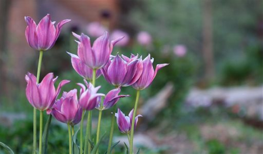Gardening-Pruning Bulbs