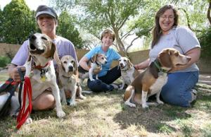 Arizona Beagle Rescue