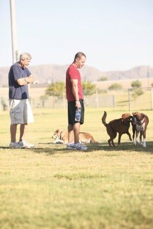 afn.100610.com.dogpark3.jpg
