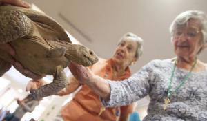 Zoo at Desert Mountain Senior Living