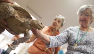 Zoo at Desert Mountain Senior Living