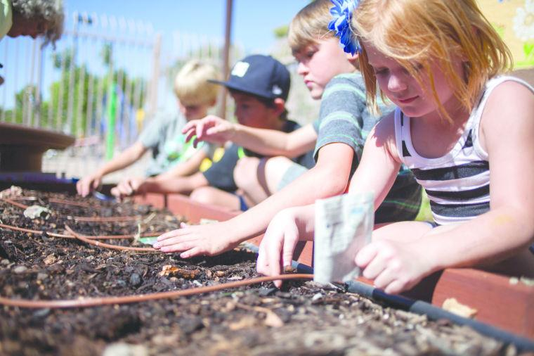 Ahwatukee Community Garden Project