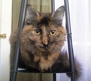 Pet of the Week: Sadie