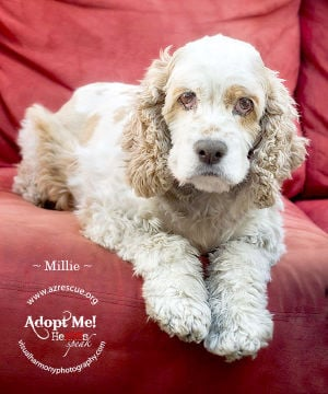 Millie: Pet of the Week