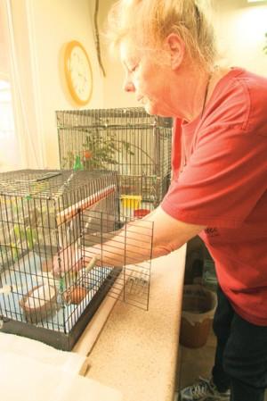 Hummingbird rescuing in AF