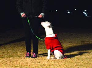 Desert Dog Obedience Ahwatukee