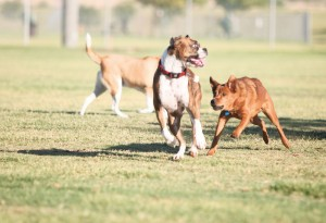 afn.100610.com.dogpark4.jpg